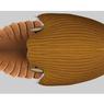 Dijuluki Kapal Induk, Fosil Makhluk Laut Berusia 506 Juta Tahun Ditemukan