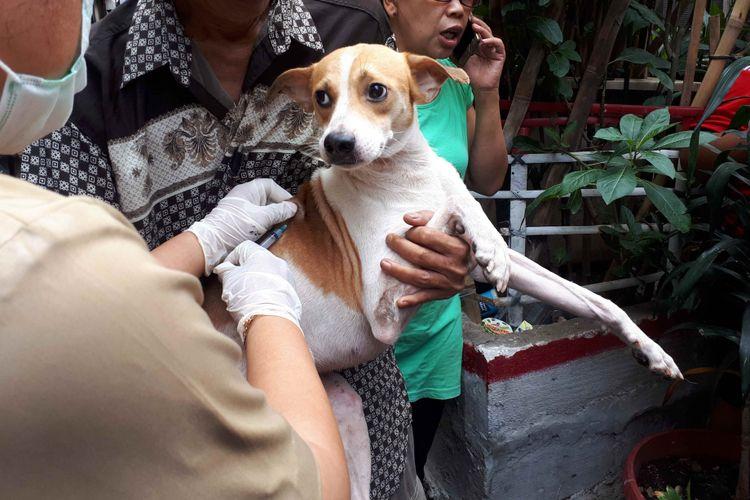 Suku Dinas Ketahanan Pangan Kelautan dan Pertanian (KPKP) Jakarta Pusat melakukan vaksin rabies gratis pada anjing di Kelurahan Mangga Dua Selatan pada Selasa (8/1/2019).