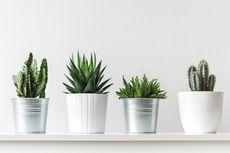 6 Tanaman Indoor yang Tidak Membutuhkan Tanah untuk Tumbuh