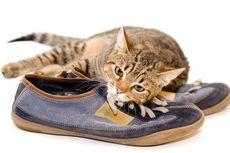 Kenapa Kucing Menyukai Benda-benda yang Bau?