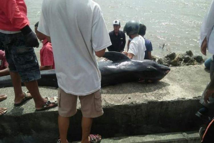 Tim BKSDA saat mengecek keberadaan Paus jenis kepala melon mati terdampar di pantai Desa Panda, Kabupaten Bima.