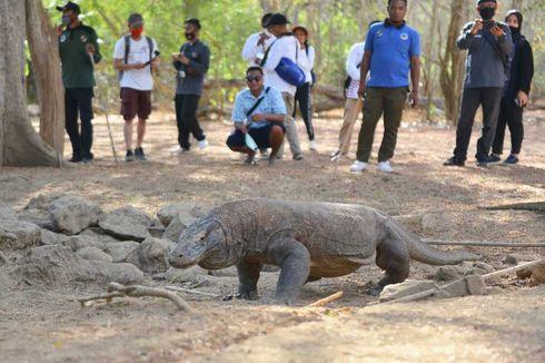 KLHK Sebut Proyek di Pulau Rinca Tak Membahayakan Populasi Komodo