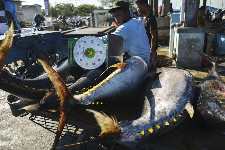 Seorang pria memindahkan ikan tuna yellowfin di pelabuhan ikan di Banda Aceh, Kamis (4/4/2019).