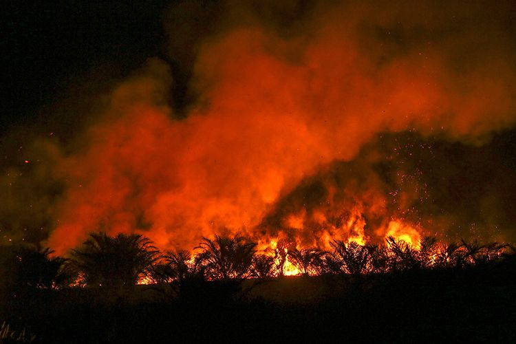 Ilustrasi: Kobaran api menyala dari lahan perkebunan sawit yang terbakar di Arisan Jaya, Ogan Ilir, Sumatera Selatan, Rabu (25/7/2018). Petugas gabungan dari BPBD Kab Ogan Ilir, Manggala Agni Daops Banyuasin, TNI dan Polri terus melakukan pemadaman kebakaran lahan di daerah tersebut.