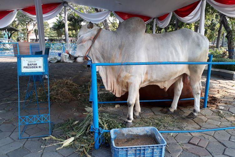 Sapi kurban sumbangan Jokowi di Masjid Al-Akbar Surabaya.