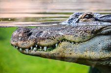 Animals Gone Wild: Indonesian Man Killed by Crocodile in Sumatra