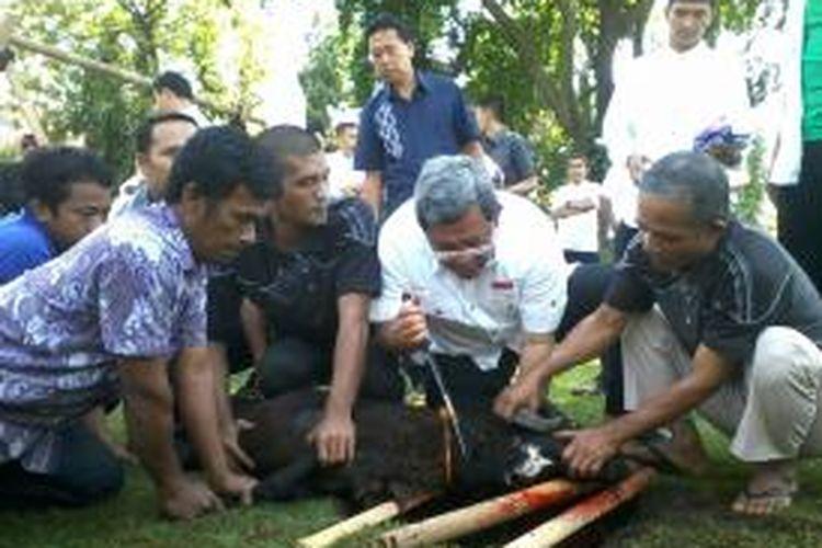Gubernur Jawa Barat Ahmad Heryawan memotong sendiri hewan kurban, Selasa (15/10/2013).