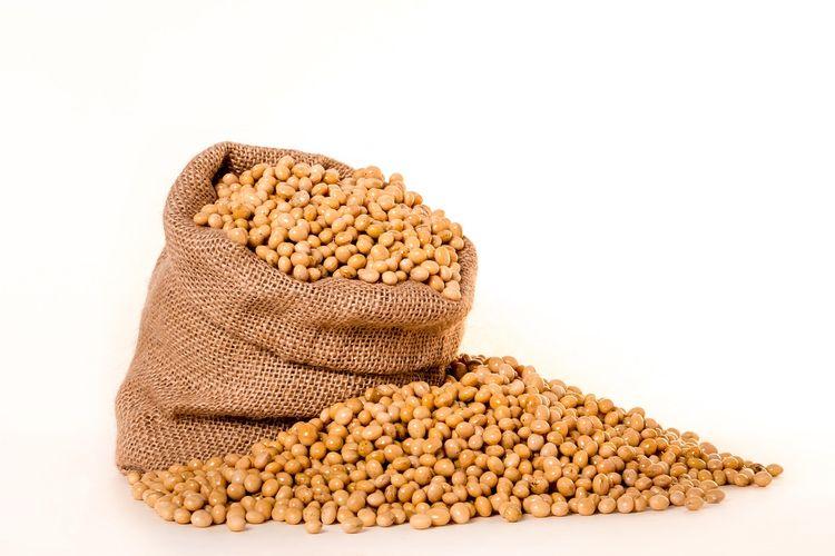 ilustrasi kacang kedelai.