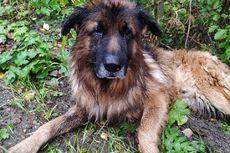 Anjing Ini Gali Kuburannya Sendiri Saat Dikubur Hidup-hidup oleh Si Pemilik