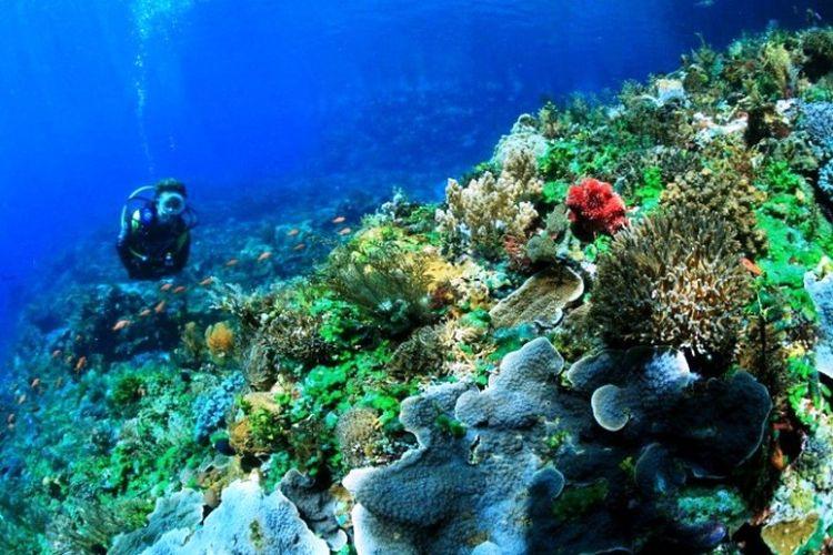 Taman Laut Selat Pantar Alor Nusa Tenggara Timur, salah satu potensi sumber daya alam lautan Indonesia untuk menjadi negara maju.