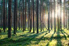 Indonesia Akhiri Kerja Sama Terkait Pengurangan Emisi dan Deforestasi dengan Norwegia
