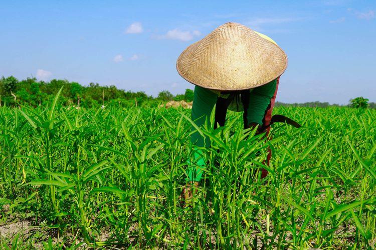 Alokasi Dana KUR Pertanian Naik, Serapan di Jateng Capai Rp 1,87 Triliun