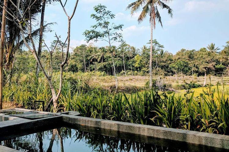 Area plunge pool dengan latar belakang sawah dan pohon kelapa di Nira Camper Village