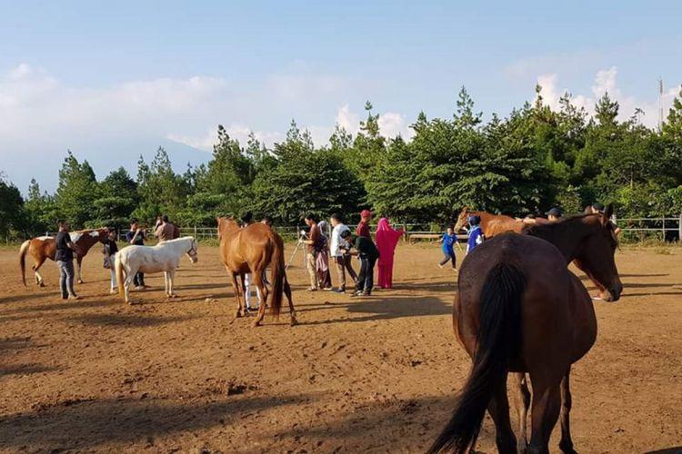 Sejumlah kuda di lapangan Megastar