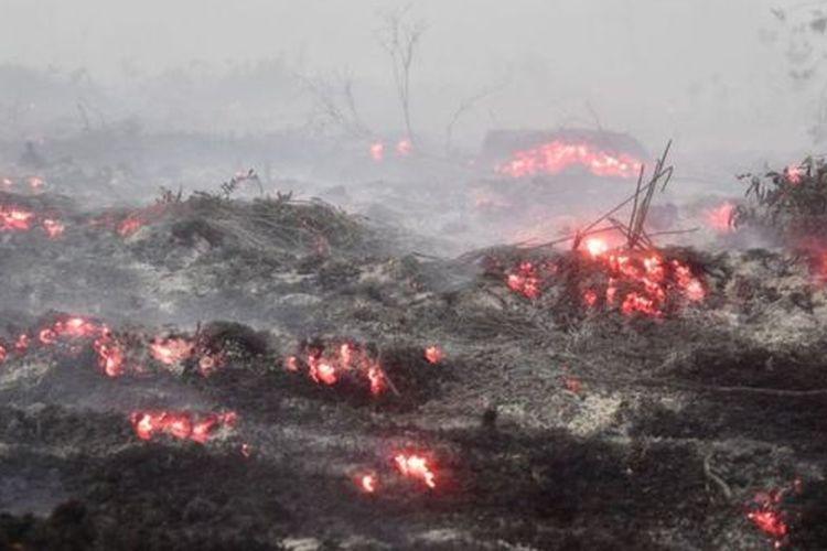 Api membara di lahan gambut dekat Kampar, Riau, 16 September lalu.
