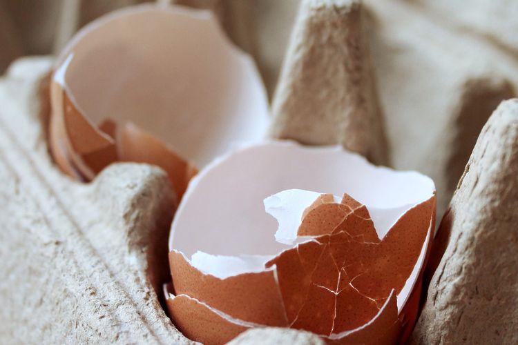Ilustrasi cangkang telur.