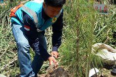 Konservasi Daerah Tangkapan Air, PLN UIP JBT I Lakukan Kegiatan Penanaman Pohon Di Kab. Bandung Barat Dan Cianjur