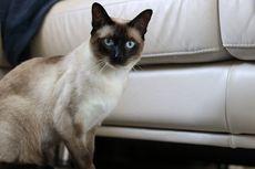 Catat, 9 Cara Mudah Menjaga Kucing Peliharaan Tetap Sehat