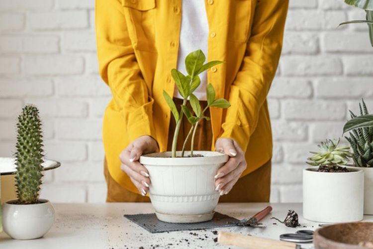 Penting untuk memastikan ukuran pot sesuai dengan kebutuhan tanaman agar pertumbuhannya tidak terganggu.