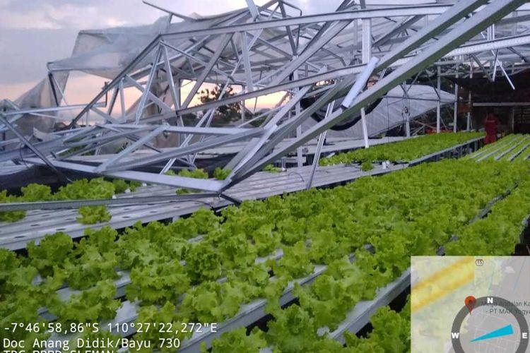 Bangunan greenhouse Hidroponik milik warga di Gendingsari-Sembur, Desa Tirtomartani, Kecamatan Kalasan, Kabupaten Sleman rusak akibat angin kencang. (Foto Dokumentasi TRC BPBD Sleman)