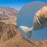 Dulu Kaya Air, Sapi Laut Purba Pernah Hidup di Gurun Mesir