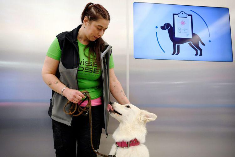 Anjing pelacak Covid-19 di Bandara Helsinki