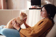 8 Tips agar Lebih Disukai Kucing