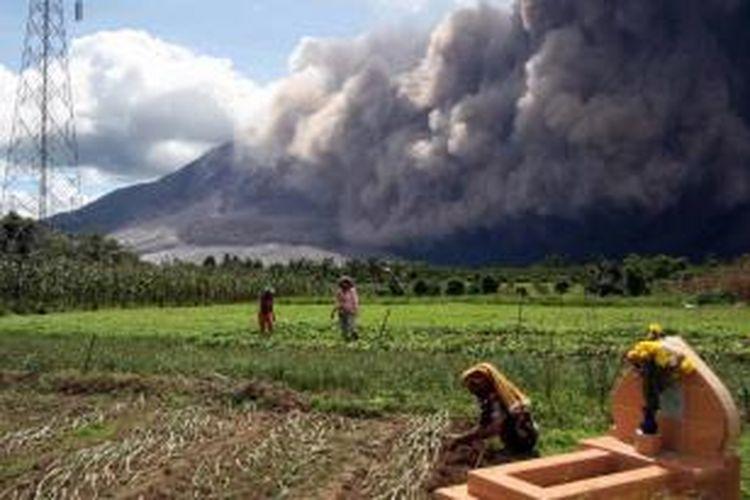 Erupsi Gunung Sinabung disertai dengan luncuran awan panas terlihat dari Desa Jeraya, Karo, Sabtu (13/6/2015) . Gunung Sinabung yang kini masih berstatus Awas masih mengalami peningkatan aktivitas.