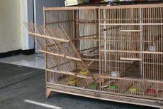 Perampok Gondol 25 Burung Kenari Seharga Rp 50 Juta