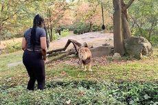 Masuk ke Kandang Singa dan Menari, Gadis Ini Jadi Buruan Polisi
