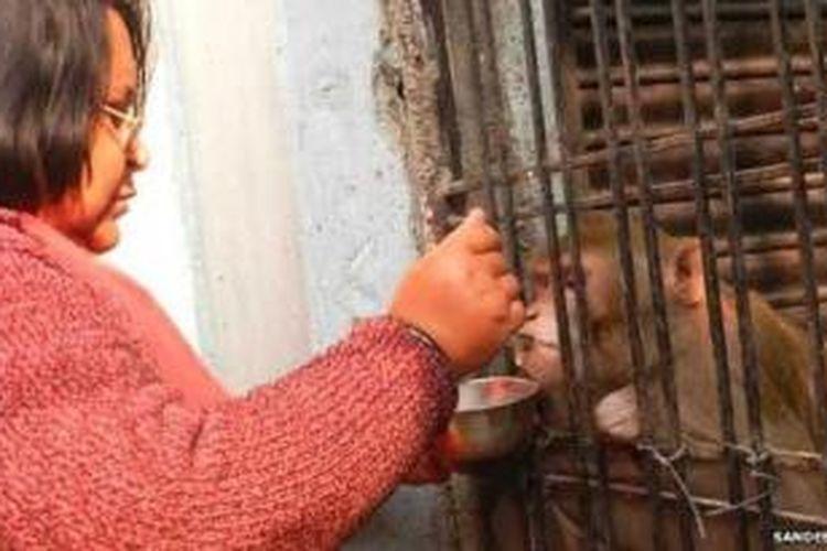 Shabista (45) menyuapkan susu untuk Chunmun, kera peliharaannya. Shabista dan suaminya, Brajesh berencana mewariskan seluruh kekayaan mereka untuk Chunmun si kera.