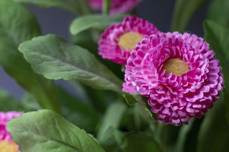 Ilustrasi tanaman palsu terbuat dari plastik.