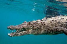 Animals Gone Wild: Crocodiles, Humans Continue to Clash in Sumatra