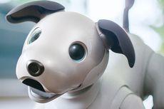Robot Anjing Aibo Lahir Kembali