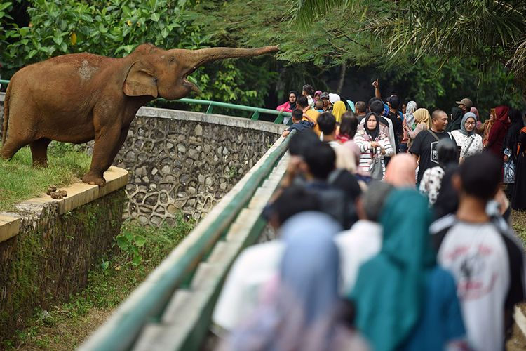Sejumlah wisatawan mengamati gajah sumatra (Elephas maximus sumatranus) di Taman Margasatwa Ragunan (TMR), Jakarta Selatan, Kamis (6/6/2019). Pengelola kebun binatang tersebut memprediksi jumlah pengunjung selama masa libur Lebaran 2019 mencapai 50.000-70.000 wisatawan setiap hari.