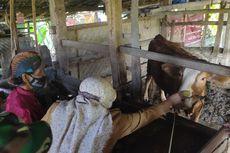 Makan Ketupat bersama Ternak, Tanda Syukur Panen Padi di Bukit Menoreh