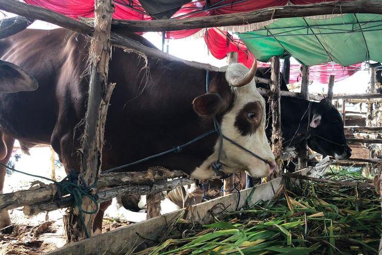 Persatuan Dokter Hewan Indonesia (PDHI) Sumatera Selatan (Sumsel) mengimbau kepada masyarakat untuk tidak mengkonsumsi hati sapi maupun kambing hewan kurban.Sebab, hewan kurban diketahui sering terpapar penyakit Zoonosis atau cacing pita di dalam tubuh.