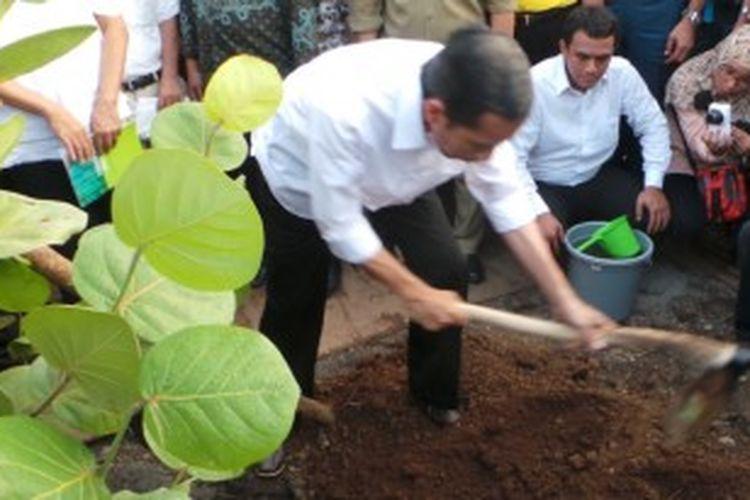 Gubernur DKI Jakarta Joko Widodo melakukan penanaman pohon di sisi barat Waduk Pluit, Jakarta Utara, Jumat (20/6/2013).