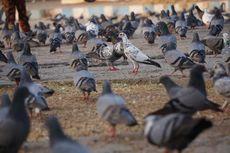 Mengenal Burung Urban, Jenis Burung Liar yang Bisanya Hidup di Kota