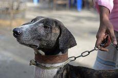 Spesies Anjing Lokal Bangladesh Ini di Ambang Kepunahan