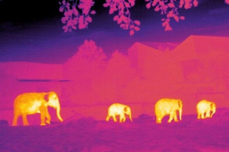 Gajah di Chester Zoo