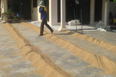 Serikat Petani: Impor beras Langgar UU Pangan