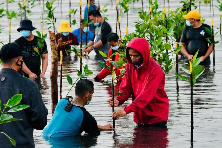 Foto Biro Pers, Media, dan Sekretariat Presiden: Presiden Joko Widodo menanam pohon mangrove di Pantai Setokok, Kecamatan Bulang, Kota Batam, Kepulauan Riau, Selasa (28/09/2021).