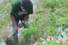 Anak Muda Didorong Jadi Petani Modern, Pengangguran Diklaim Berkurang