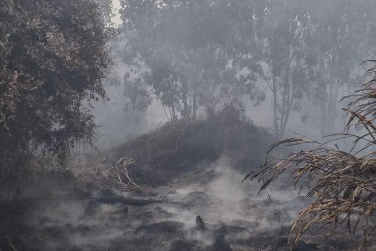 Kebakaran hutan dan lahan kembali terjadi di Riau memasuki musim kemarau yang di prediksi terjadi hingga pertengahan september 2019 mendatang