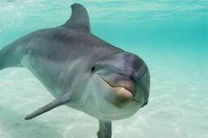 Lumba-lumba, Mamalia yang Cerdas