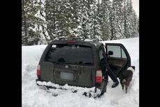 Terjebak Salju Selama 5 Hari, Pria dan Anjingnya Selamat Berkat Saus Taco