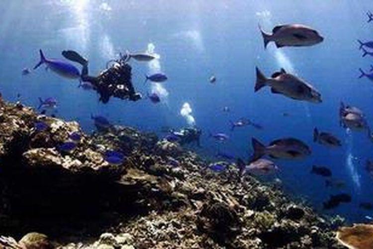Panorama bawah laut Raja Ampat yang terkenal indah.