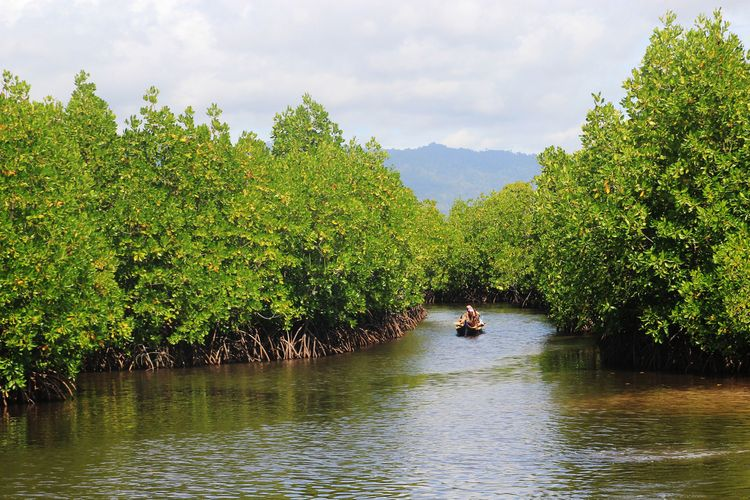 Kondisi hutan bakau warga bajau serumpun yang subur. Mereka memperjuangkan pelestarian hutan ini untuk kehidupan masa depan yang lebih baik.