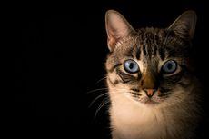 Penyebab Kematian Mendadak pada Kucing yang Sehat dan Masih Muda